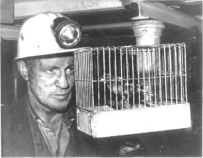 Miner holding a bird in a cage